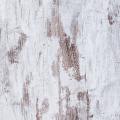 Chêne Blanchi 078